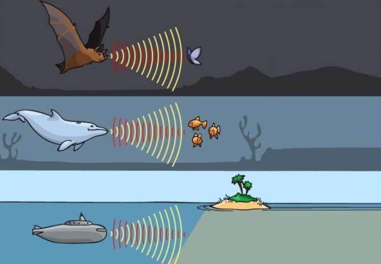 Способны ли люди научиться «видеть» предметы с помощью эхолокации?