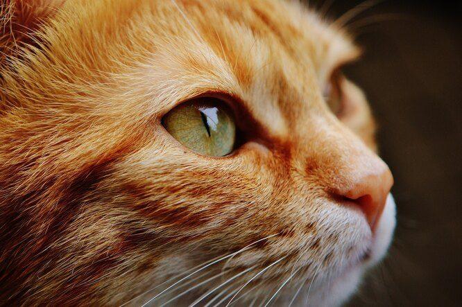 Кто сказал «Мяу!», или С кошачьего на человеческий