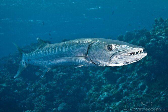 10 самых опасных обитателей морских глубин