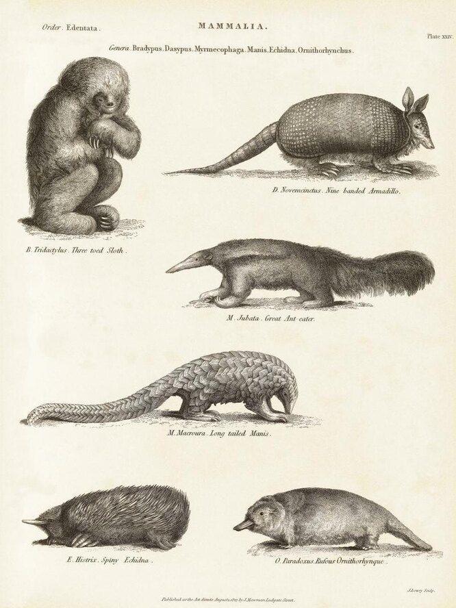 Доисторические животные, которые древнее, чем сама жизнь