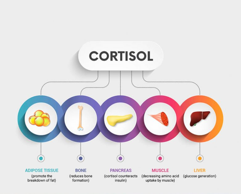 Что мы знаем о кортизоле