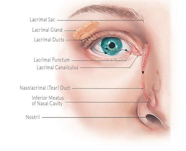 Как сохранить здоровье глаз на долгие годы