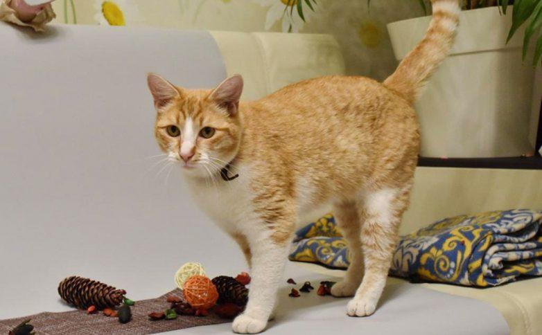 Ученые из Петербурга обследовали зараженного коронавирусом кота