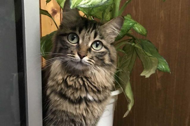 Стартовали доклинические исследования вакцины от аллергии на кошек