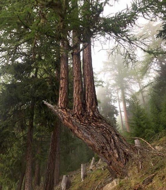 20 обалденных явлений природы