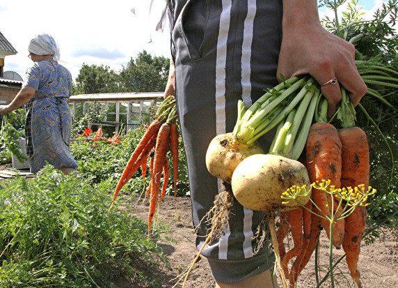 Дачникам озвучили условия для оплаты налога от продажи овощей