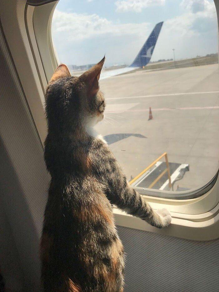 Ещё 15 милейших животных-путешественников