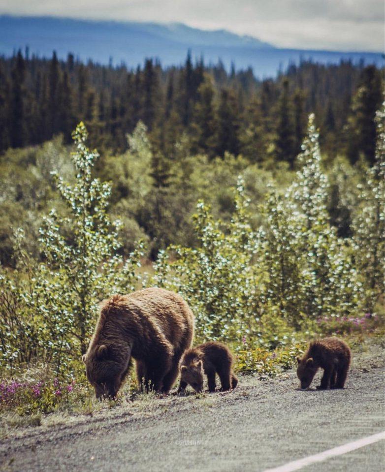 Фантастическая природа Аляски на снимках Патрика Туна
