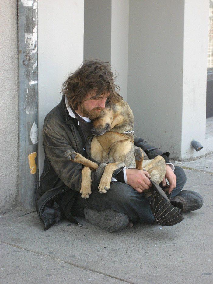 картинки нищета и собаки вам приснится, что