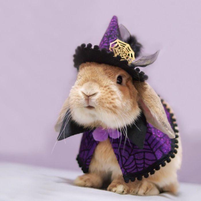 хуже, когда картинки кролик в костюме святыня имеет своего