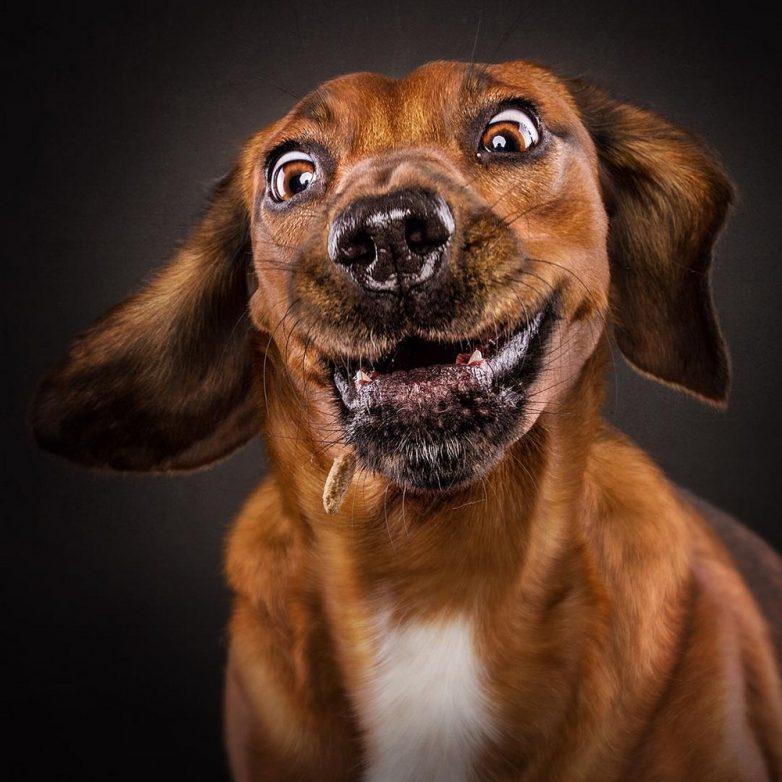 смешная картинка пса опция добавления