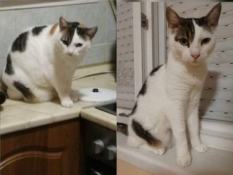 Котики, которые смогли взять себя в лапки и распрощаться с лишним весом