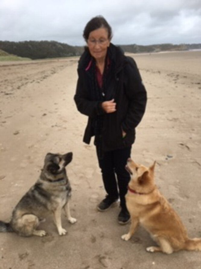 Спасенный пес пролетел 2 тысячи километров, чтобы стать другом одинокой женщины