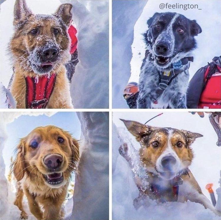 18 историй о героических собаках