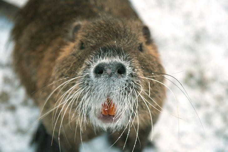 16 фактов о животном мире