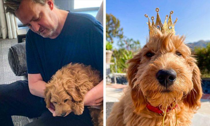 10 звезд, которые воплотили в жизнь наши детские мечты о собаке