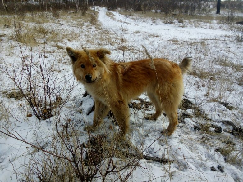 Девушка боролась за щенка, которого плохо кормили и почти не выгуливали