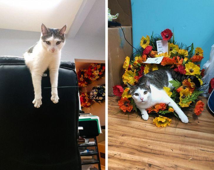 Коты, которые не захотели сидеть на шее у своих хозяев, поэтому нашли работу
