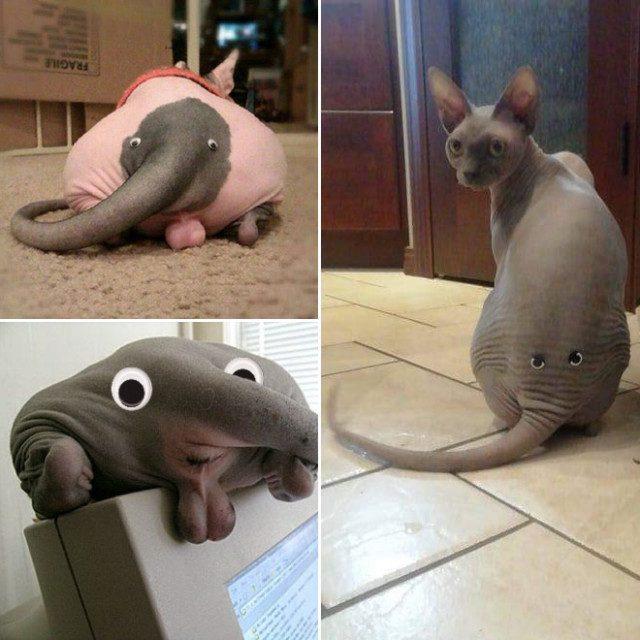 Кошачья жёппка с бегающими глазами похожа на слоника