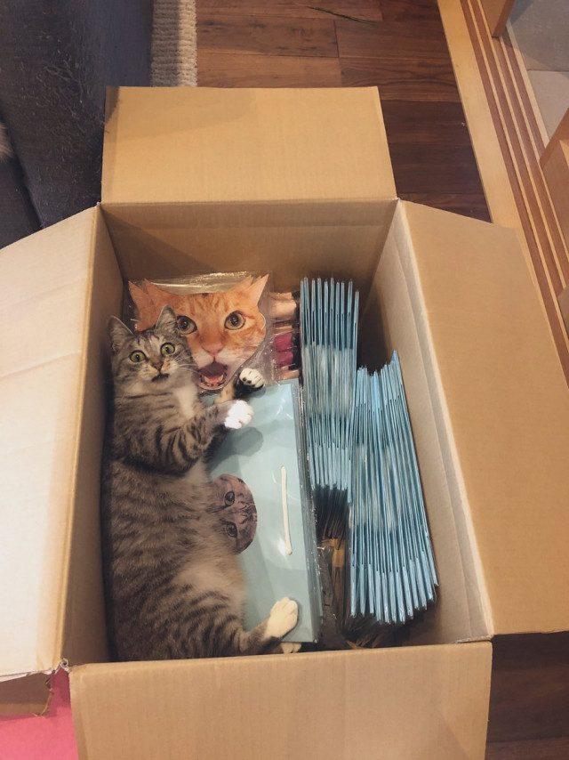 29 кошек там, где их не должно быть