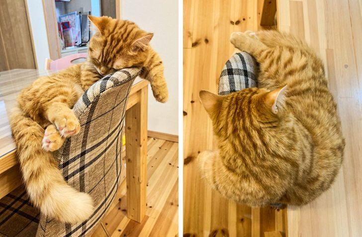 Котики, у которых ум за разум зашел