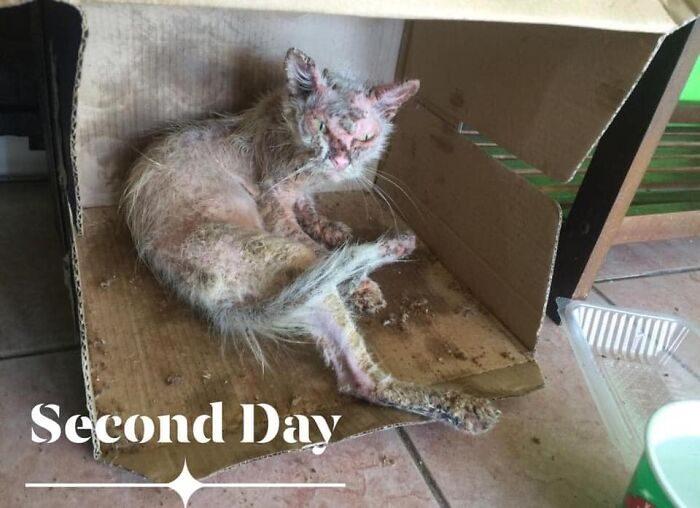 Уличную кошку спасли от неминуемой гибели