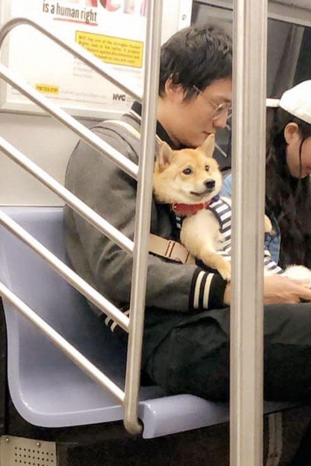 Самые очаровательные пассажиры, которых можно встретить в поездке