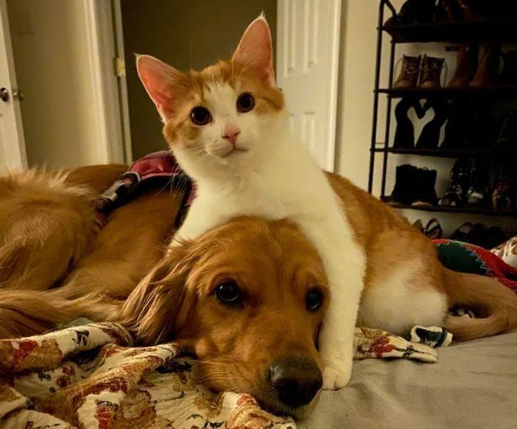 Фото нежной дружбы животных, которой по-доброму завидуешь