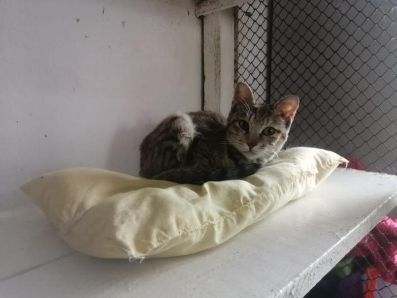 Пенсионерка шьёт подушки для кошек из приюта