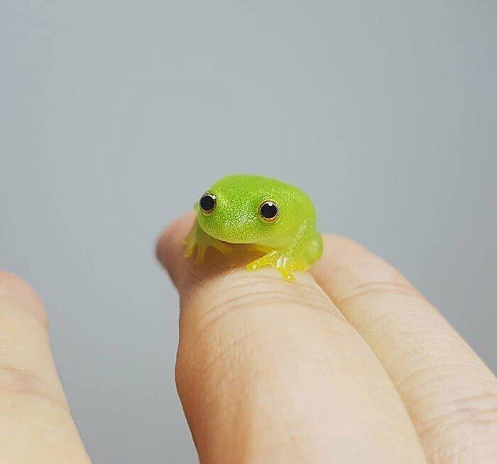 Какие крохи! Необычные животные размером с палец