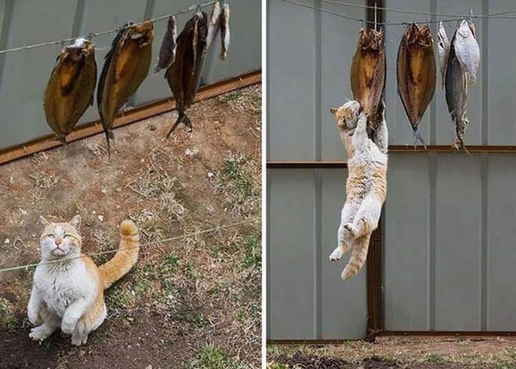 Без кота и жизнь не та, а с котом?