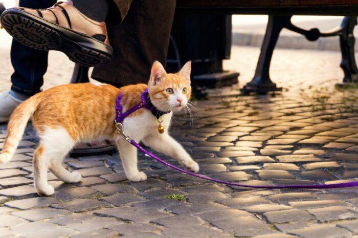Почему в Австралии запрещают выпускать кошек на улицу