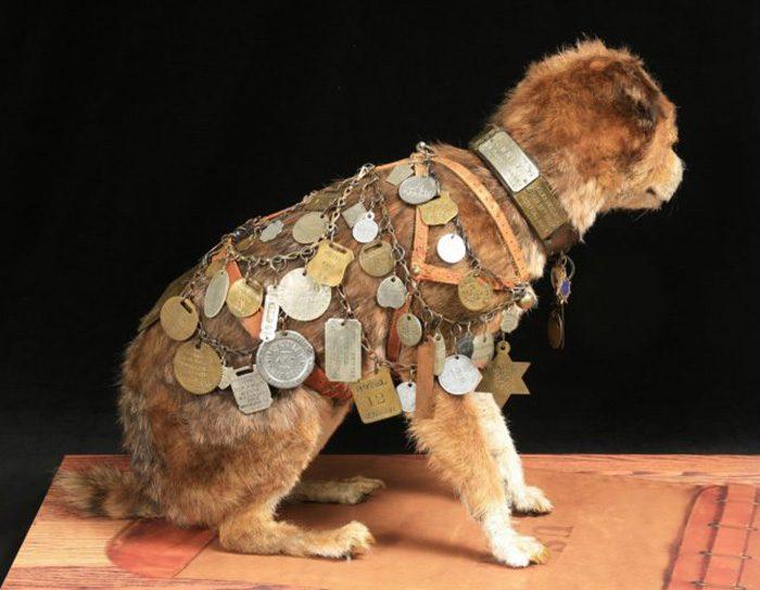 Почтовый пёс Оуни, который стал символом верности и человеческого предательства