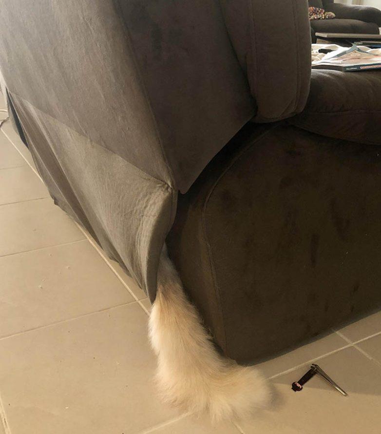 Доказательства, что домашние животные вообще не умеют играть в прятки!