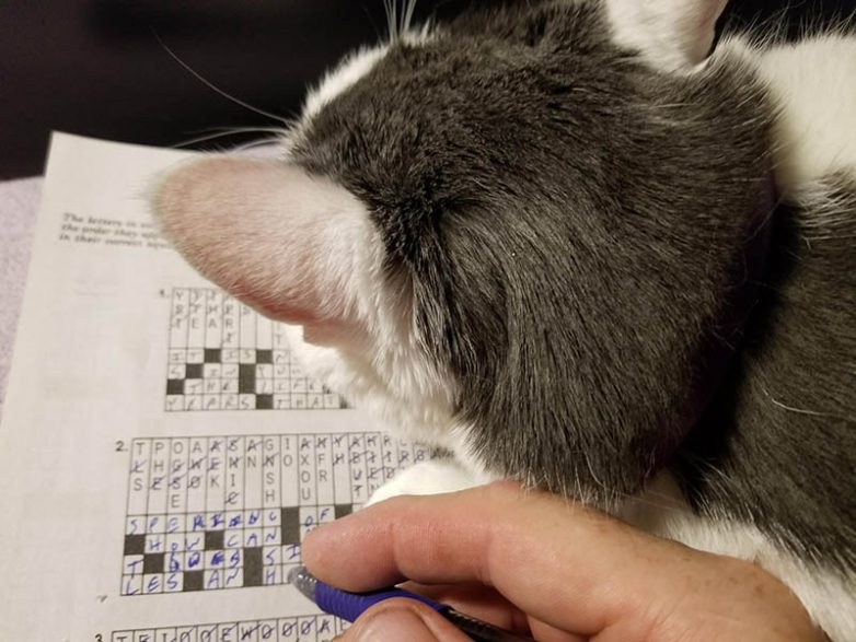 Сверхнаглючие котики, чье хобби – попирать личное пространство их хозяев