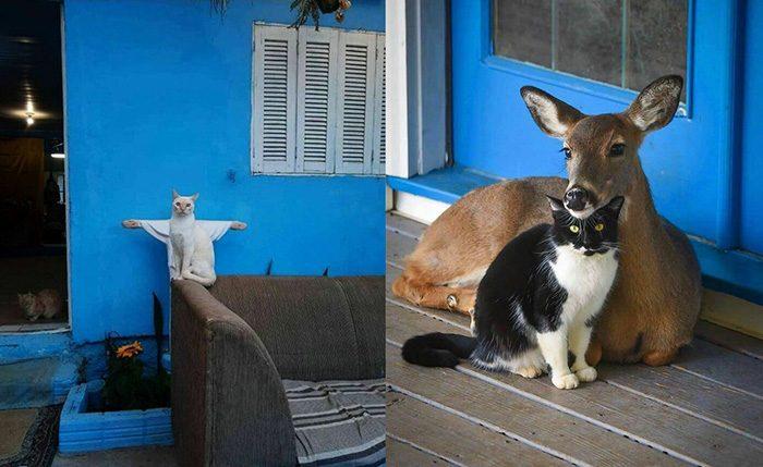 Забавные, странные и милые фото животных, которые заставляют влюбиться в них ещё больше