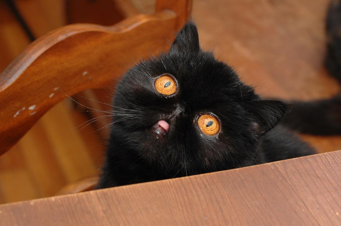 Картинки с черными котами прикольные