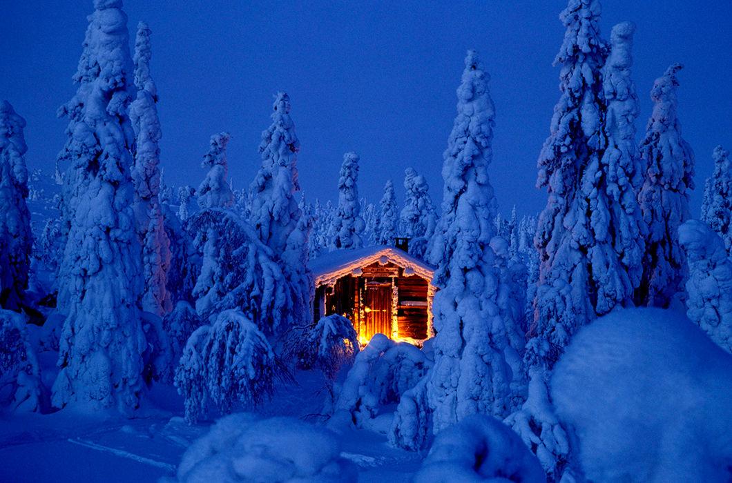 обучение ведущих фото сказочный лес под новый год особенностью
